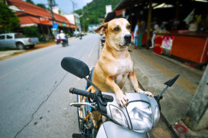 dog on motorcycle