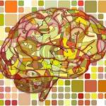 brain-951871_640 (2)
